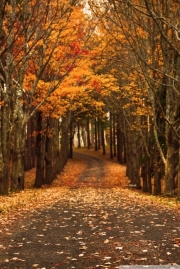 Autumn-Phone-Wallpapers-015.jpg